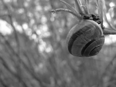 Photograph - Hanging On by Rhonda Barrett