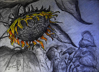 Sunflowers Drawings - Hanging on to Life - Sunflower by Jose A Gonzalez Jr