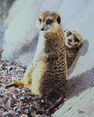 Meerkat Drawing - Hanging Out by Bernd Huss