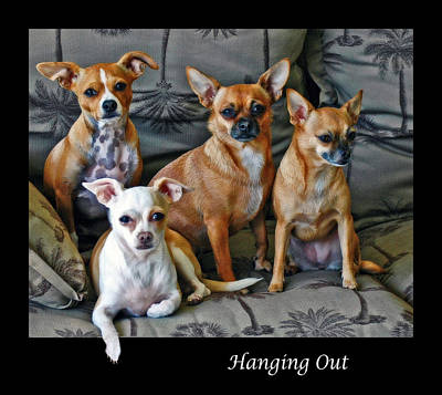 Photograph - Hanging Out With Chihuahuas by Ginger Wakem