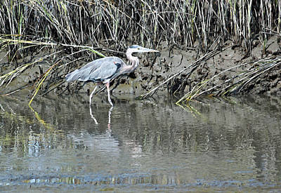 Heron Digital Art - Hanging Out In The Marsh II by Suzanne Gaff