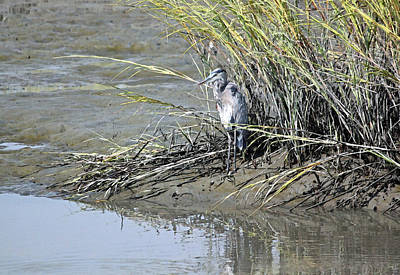 Heron Digital Art - Hanging Out In The Marsh by Suzanne Gaff