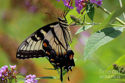 Photograph - Hanging Out In The Shade by Jackie Farnsworth