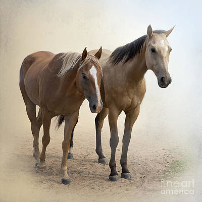 Sorrel Horse Photograph - Hanging Out Together by Betty LaRue