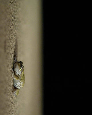 Spring Peepers Photograph - Hanging Out by Zachary Hitchcock