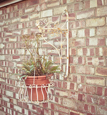 Hanging Basket Photograph - Hanging Plant by Tom Gowanlock