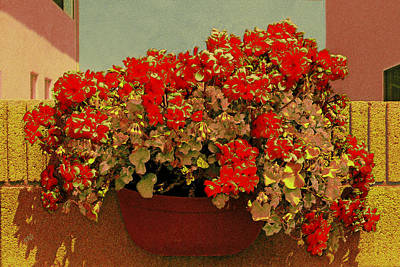 Photograph - Hanging Pot With Geranium by Ben and Raisa Gertsberg