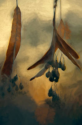 Hanging  Seed Pods Art Print
