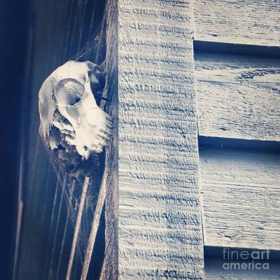 Photograph - Hanging Skull by J Kinion