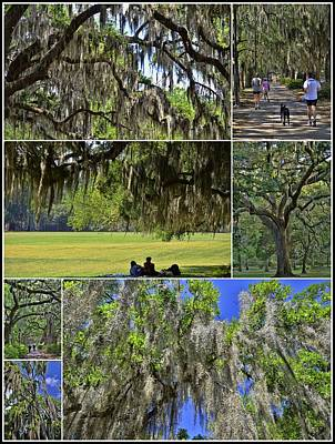 Photograph - Hanging Spanish Moss Collage 2 by Allen Beatty