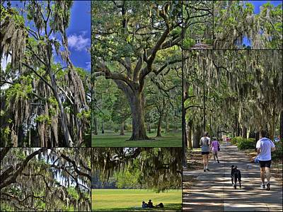 Photograph - Hanging Spanish Moss Collage by Allen Beatty