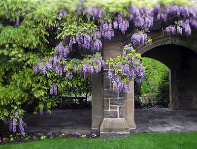 Lavender Digital Art - Hanging Wisteria by Jessica Jenney