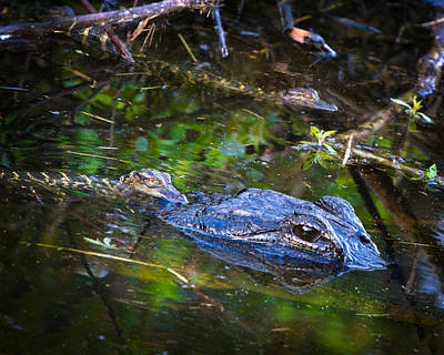 Alligator Photograph - Hangin With Mom by Mark Andrew Thomas