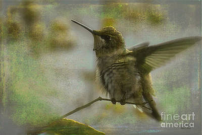 Photograph - Hannah The Hummer by Amanda Collins