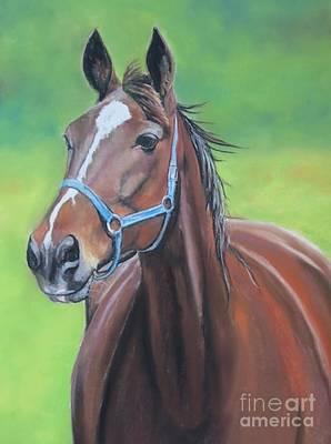Painting - Hanover Shoe Farm Horse by Charlotte Yealey