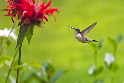 Happiness Hummingbird Garden Art Print