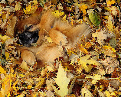 Happiness Is A Fresh Pile Of Leaves Art Print by Joe Wicks