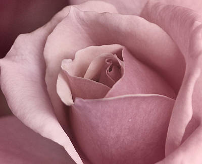 Creative Photograph - Happiness Is A Rose by The Art Of Marilyn Ridoutt-Greene