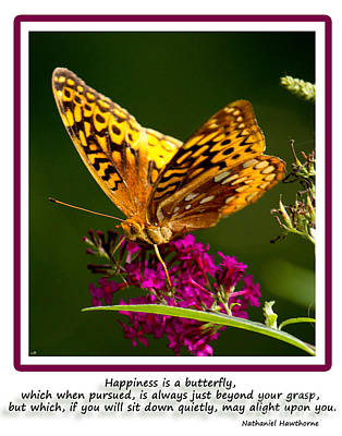 Photograph - Happiness Is  Butterfly by Sandra Clark