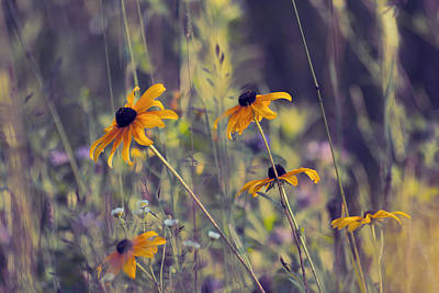 Black Eyed Susan Photograph - Happiness Is In The Meadows - L03 by Variance Collections