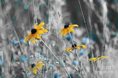 Black Eyed Susan Photograph - Happiness Is In The Meadows - Sc02a by Variance Collections
