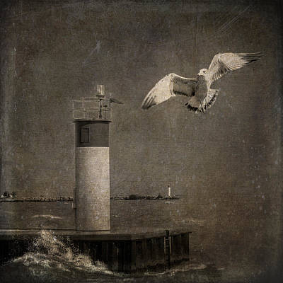 Digital Art - Happy And Free As A Seagull by Eduardo Tavares