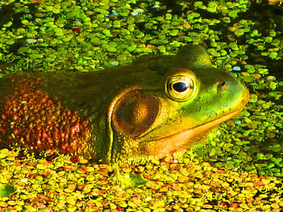 Happy As A Frog In A Pond Art Print