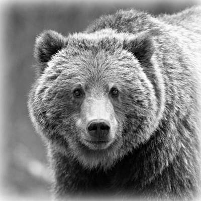 Brown Bear Photograph - Happy Bear by Stephen Stookey