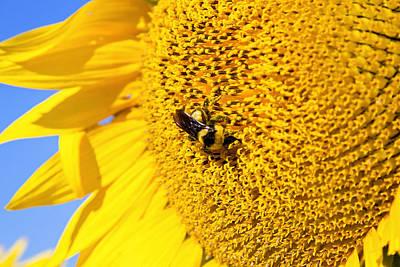 Photograph - Happy Bee by Deb Buchanan