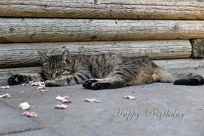 Happy Birthday Sleeping Cat Art Print