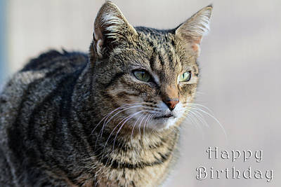Happy Birthday Tabby Art Print