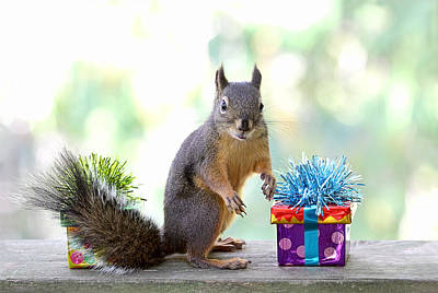 Photograph - Happy Birthday To Tipsy The Squirrel by Peggy Collins