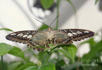 Happy Butterfly Original by Sandra Schroeder