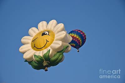 Balloon Flower Photograph - Happy Daisy by Charles Dobbs
