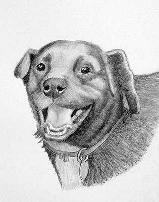 Drawing - Happy Dawg by Lorraine Foster
