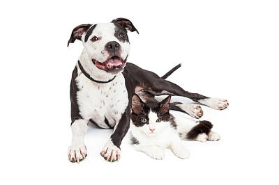 Happy Dog And Kitten Together Art Print