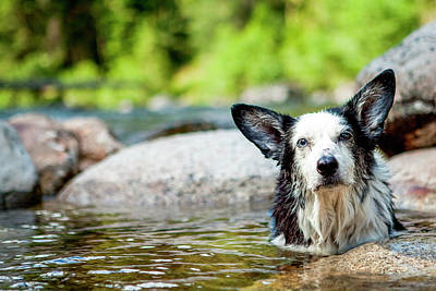 Dog Swimming Wall Art - Photograph - Happy Dog In Hot Springs, Jerry Johnson by James White