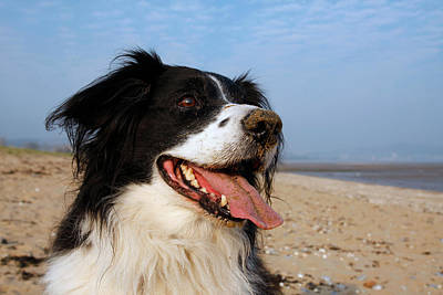 Photograph - Happy Dog by Steve Ball