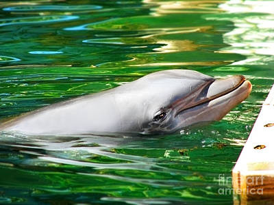 Art Print featuring the photograph Happy Dolphin by Kristine Merc