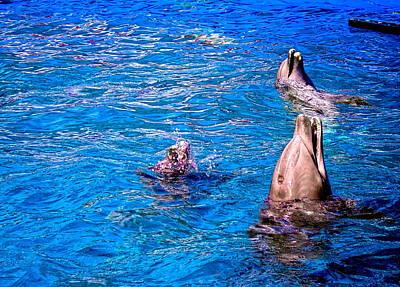 Happy Dolphins Original