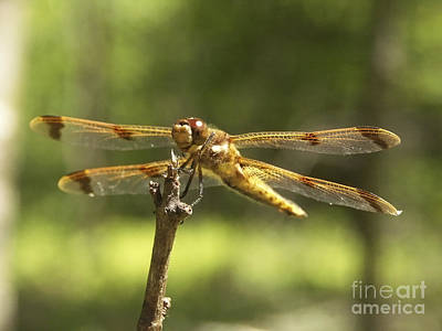 Happy Dragonfly Art Print by Patrick Fennell