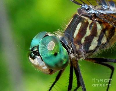 Photograph - Happy Dragonfly by Renee Trenholm