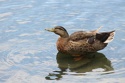 Photograph - Happy Duck by Jeanne Kay Juhos
