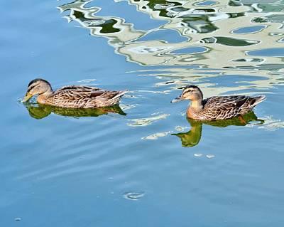 Photograph - Happy Ducks by Kim Bemis