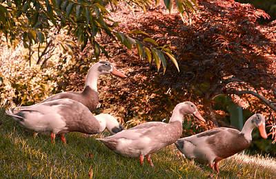 Photograph - Happy Ducks by Natalie Rotman Cote