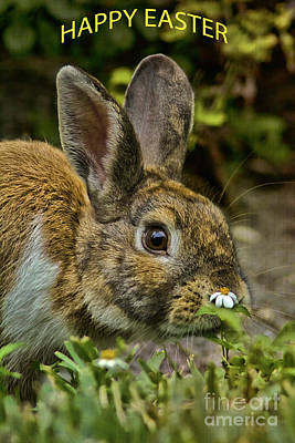 Hop Photograph - Happy Easter by Anne Rodkin