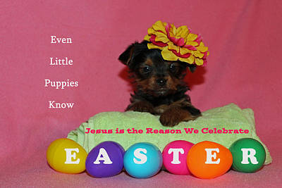 Yorkie Digital Art - Happy Easter by Lorna Rogers Photography