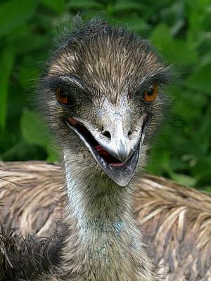 Emu Photograph - Happy Emu by Devina Browning