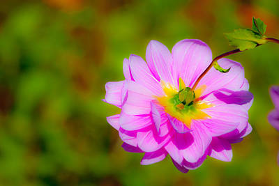 Pinks And Purple Petals Photograph - Happy Flower by Karol Livote