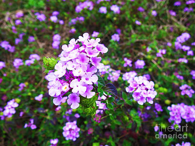 Photograph - Happy Flowers by Champion Chiang